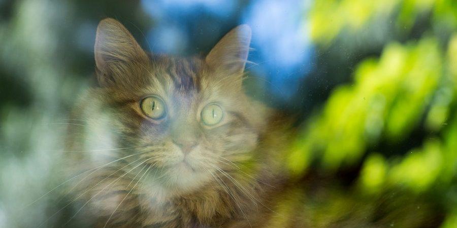 16509d5e2f2a Νόσος Κατώτερου Ουροποιητικού Γάτας - Αίλουρος Ιατρείο για γάτες