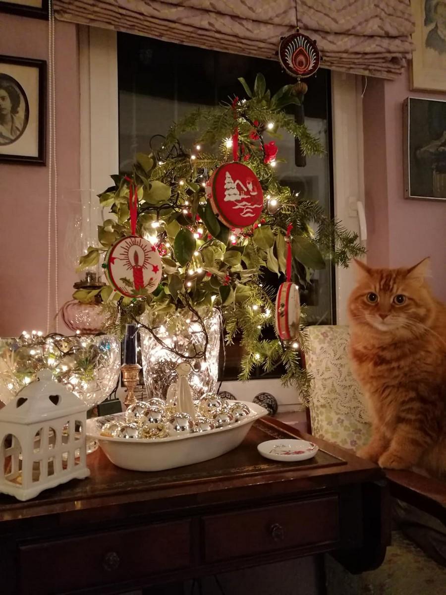 8c4a51a53ce0 Χριστούγεννα και γάτες - Αίλουρος Ιατρείο για γάτες