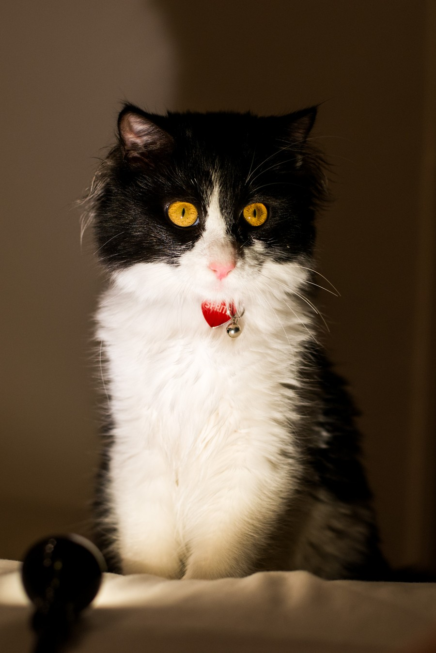 9a298434e8e4 ΣΥΜΠΕΡΙΦΟΡΑ   ΑΙΣΘΗΣΕΙΣ Αίλουρος ιατρείο για γάτες