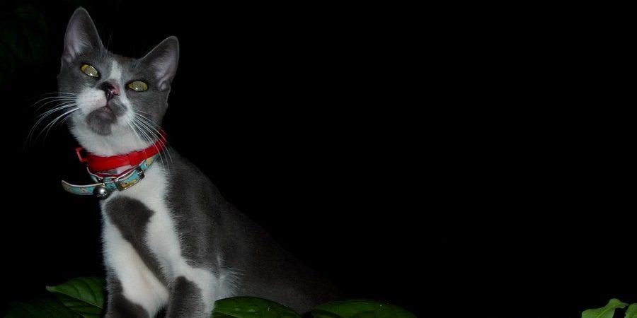 bcec1e3267fd Γιατί η γάτα μου λερώνει εκτός αμμολεκάνης  - Αίλουρος Ιατρείο για γάτες