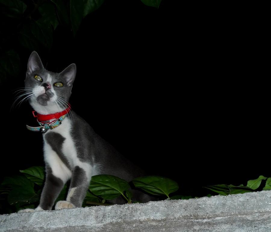 32df035ad6c1 Γιατί η γάτα μου λερώνει εκτός αμμολεκάνης  - Αίλουρος Ιατρείο για γάτες